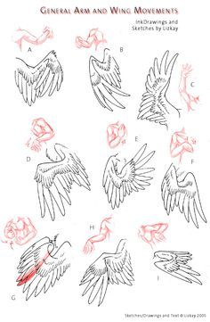 how to draw dragon wings - Google Search