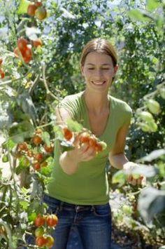 More Organic Pest Control