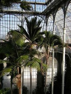 Glass houses and palm trees. #royalbotanicgarden Credit: katemonster