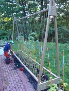 garden trellis for peas.
