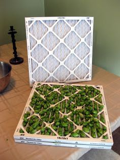 Drying Hops at Home | The Mad Fermentationist - Homebrewing Blog