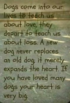 Dogs teach us about love and loss