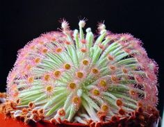 Strange and Unusual Exotic Plants and Flowers