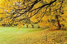 Parc de Villeneuve d'Ascq ( Nord France )