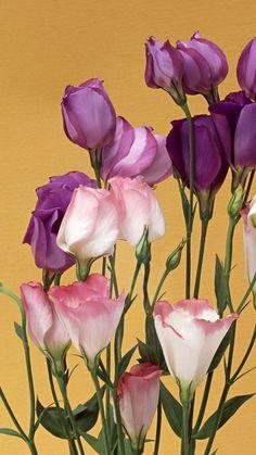 720x1280 Wallpaper lisianthus russell, flowers, bouquet, buds, tender