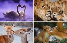 De leukste plaatjes van liefde tussen dieren