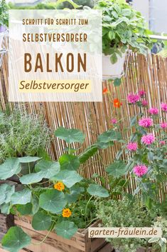 Selbstversorger Balkon Step by step to the self-catering balcony. With these tips you can take care Hydrangea Care, Hydrangea Flower, Rooftop Garden, Balcony Garden, Rooftop Design, Garden Quotes, Real Plants, Gardening For Beginners, Plant Care