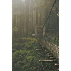 http://instagram.com/cosmosumsu  #bridge #forest #afterrain