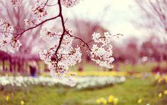 Přejeme krásný jarní den, který se činí jak se patří! Abychom vám udělali ještě větší radost, budeme se činit i my - protože jaro je obdobím hloubkové očisty celého těla, až do konce dubna můžete využít akce 10% na Obličejovou masku LUBANA! http://www.lubana-kosmetika.cz/oblicejova-maska/