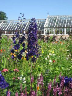 Delphiniums in the Cottage Garden, Helmsley Walled Garden