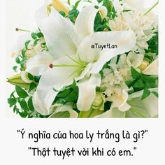 Kite Quotes, Flower Meanings, Manga Love, Scenery, Flowers, Plants, Deep, Life, Landscape