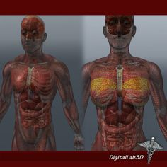 1000+ images about Full Body Skeleton on Pinterest | Human ...