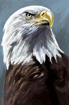 Speed painting: Eagle by Scott-Edward