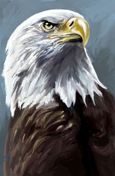 Speed painting: Eagle by Scott-Edward