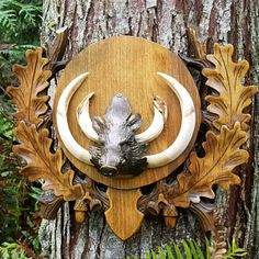 Items similar to Hand Carved Solid Wood Mounting Plaque Taxidermy (Wild Boar) on Etsy European Mounts Deer, Euro Mounts, Taxidermy Decor, Fallow Deer, Roe Deer, Trophy Rooms, Wood Carving Patterns, Black Forest, Antlers