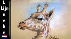 GIRAF tekenen - Giraffen hoofd met Pastel Potlood stap voor stap