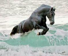 caballos pura sangre andaluces - Google Search