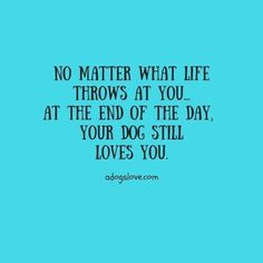 No matter what life throws at you. At the end of the day, your dog still loves you. No matter what life throws at you.& The post No matter what life throws at you. At the end of the day, your dog still loves y& appeared first on Coulson Puppies. Quotes To Live By, Me Quotes, Funny Quotes, Dog Quotes Love, Schnauzers, I Love Dogs, Puppy Love, Jiff Pom, Der Boxer