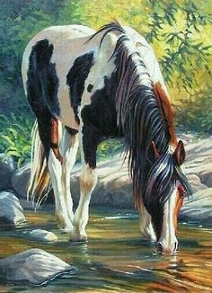 Paint Horse, beautiful painting of horse drinking out of the cool creek water. Please also visit www. for colorful inspirational art. Horse Drawings, Animal Drawings, Pencil Drawings, Pencil Art, Pretty Horses, Beautiful Horses, Beautiful Women, Arte Equina, Watercolor Horse