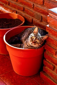 Kitty in flower pot...