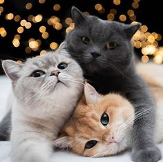 - your daily dose of funny cats - cute kittens - pet memes - pets in clothes - kitty breeds - sweet animal pictures - perfect photos for cat moms Cute Baby Cats, Cute Cats And Kittens, Cute Baby Animals, I Love Cats, Crazy Cats, Kittens Cutest, Funny Animals, Cutest Cats Ever, Pretty Cats