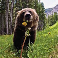 Nature Animals, Animals And Pets, Baby Animals, Funny Animals, Cute Animals, Baby Pandas, Wild Animals, Beautiful Creatures, Animals Beautiful