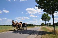 Foto: Ben Saanen. 7 juli 2015 #nature #brabant #natuur #horses #paarden #holland
