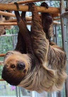 The Sloth Center Rainier, OR #Conservation #Education