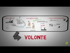L'instinct de volonté - The willpower instinct | développement personnel | résumé français - YouTube