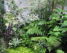 small fern garden - Google Search