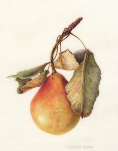 Exquisite botanical watercolor pear