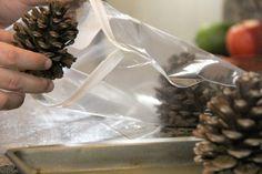 Zorg ervoor dat dennenappels zijn cool, zodat ze de zak niet zal smelten.