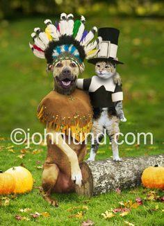A dog and a cat are best buddies at this thanksgiving get together. Funny pet pictures, conceptual stock imagery, images printed on merchandise and gifts, and fine art prints.