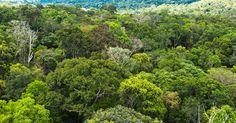 Foreste, Lifegate: salvi 400mila metri quadrati grazie a like Facebook