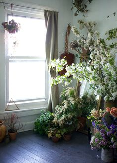 Indoor Plants / Bohemian Homes