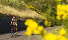 Full-service, Self Guided Southern Tuscany Cycling Tours from LifeCycle Adventures. Partner Yoga, Italy Tours, Cycling Tours, Southern, Country Roads, Bikini, Adventure, Vacation, Italy Italy