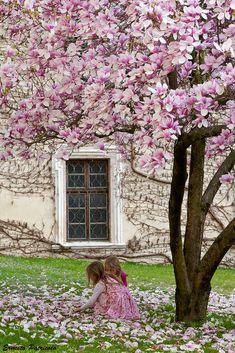 https://flic.kr/p/7yNFge | primavera-spring-frühling | foto della settimana su juza forum