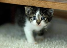cute kitten 7 Daily Awww: Cats keep us entertained without even trying (33 photos)