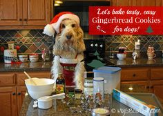 Gingerbread Cookies For Dogs - Easy and Yummy!