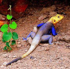 colorful lizard by cj jr, via Flickr