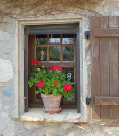 potted red geranium in a window