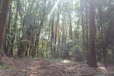 Dieses Licht im Wald :D