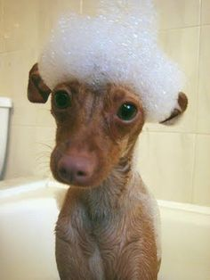 What? You didn't know the proper attire for baths was a mini sombrero made of bubbles?