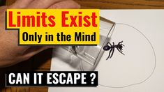 Ant Trapped in Pen Circle - Limits Exist only in the Mind ? Bug Trap, Fire Ants, Pest Control, Funny, Hilarious, Entertaining, Fun