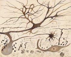 Neuronas. Santiago Ramón y Cajal (1852-1934)