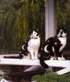 Moon Kitties! <3