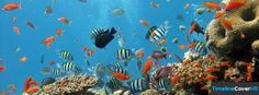 Underwater World Of Fishes Timeline Cover 850x315 Facebook Covers - Timeline Cover HD