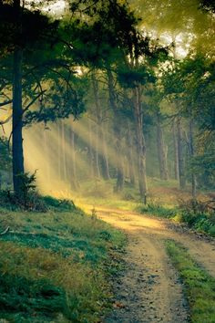 Photograph mystical forest by Frank Meinel on Forest Trail, Tree Forest, Forest Light, Beautiful World, Beautiful Places, Mystical Forest, Interior Exterior, Amazing Nature, Wonders Of The World