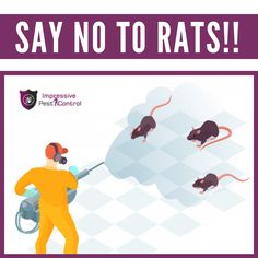 For More Information, you can visit our website:  #impressivepestcontrol #pestcontrolservice #pestcontrolservices #pestremoval #pestexterminator #pestcontrolbrisbane #pestcontrolaustralia #pestcontrolsydney #ratcontrol #ratremoval Rat Control, Pest Control Services, Removal Services, Rats, Brisbane, Website