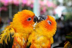 Love-Birds-7.jpg 1,600×1,067 pixels